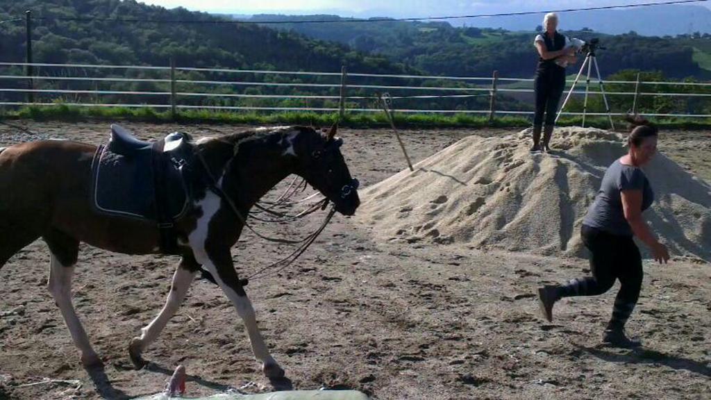 Fit mach mit für Pferd und Mensch!